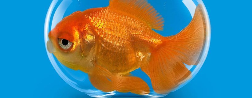 Come concentrarsi nello studio (anche se ora hai l'attenzione di un pesce rosso)